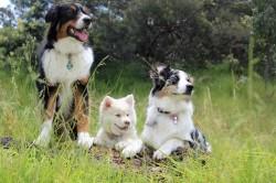 Profesionali veterinarija