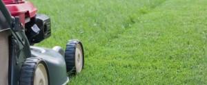 Žolės priežiūra namusoe