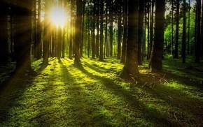 Paslaugos susijusios su miškais